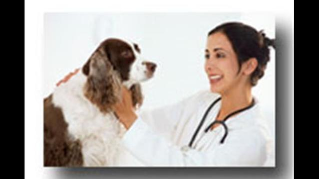 Pharmacists Helping Vets and Pets