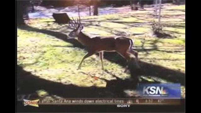 Brad's Beat: Deer Trapped in Pool