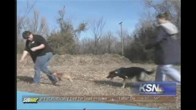 Brad's Beat: Walking the Dogs for Exercise